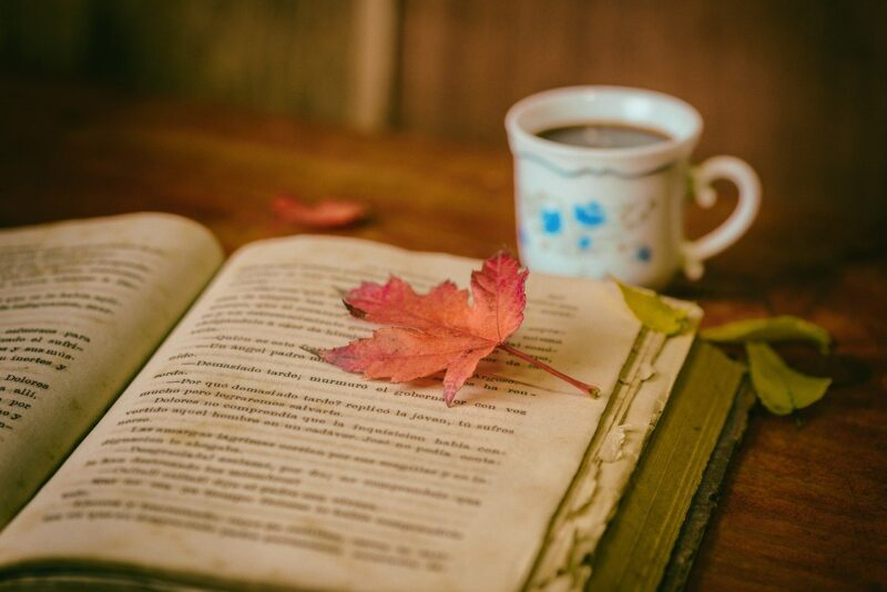 5 cozy books to Curl Up With on a Rainy Day